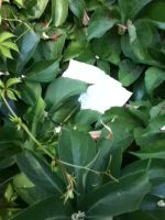 a note hiding among leaf by littlebluewildfire