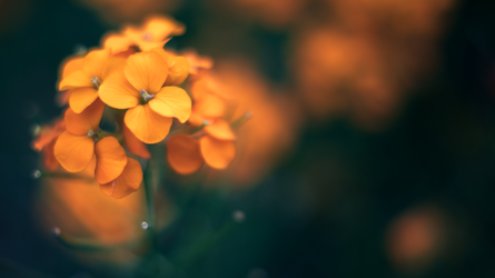 Spring Softness Wallpaper by Pierre-Lagarde