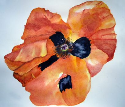 Icelandic Poppy Study by mightee-mouse
