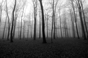 lost in the woods by augenweide