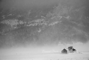 Lost in the blizzard... by vincentfavre