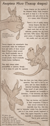 Teacup Dragon Species Sheet by Aeoptera