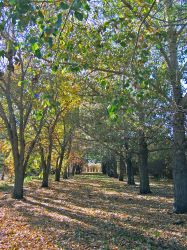 Autumn Tree Line by Book-of-Light-Stock