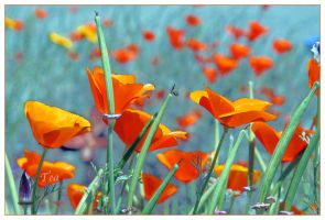 Fields of Thanks and Gratitude by TeaPhotography