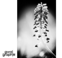 black and white spring 5 by Gwali