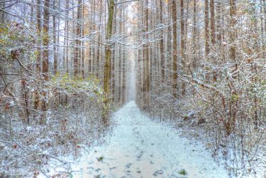 The Trail by PHOTOBUG51