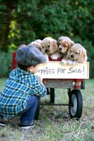 Puppies for sale by ForeverCreative