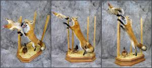 Fox in the Henhouse by WeirdCityTaxidermy