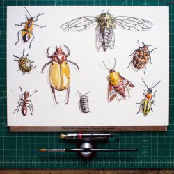 Insect Study by smallbatchb