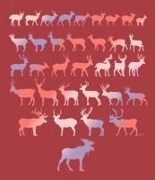 Types of Deers. by twapa