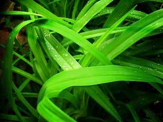 Droplets of Green by mandeax