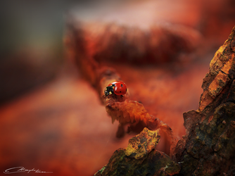 Ladybug of the forest by MaaykeKlaver