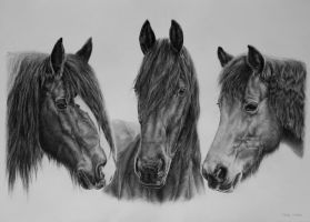 Three horses by Odette1994