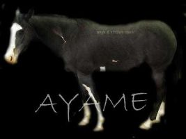 AYME by ONYX-BABE