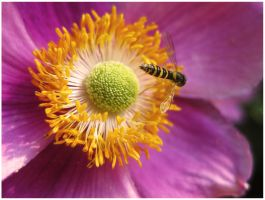Bee on a flower 1 by dunkeltoy