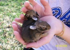 Baby Bunnies by Somethingneverdone
