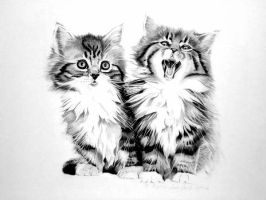 Kittens by Cr1msonCloud