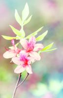 The color of spring by JunJun510