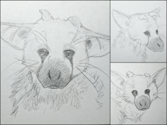 Trico - pencil sketches by IcelectricSpyro