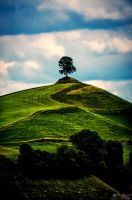 The Lonesome Tree by LeWelsch