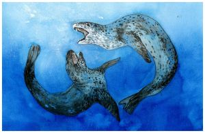 Sparring Leopard Seals by oxpecker