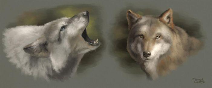Wolves Study by mighty5cent