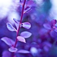 Violet by NanaPHOTOGRAPHY