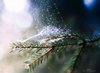 Dew 2 by samgreal