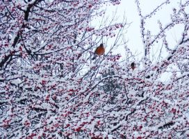 Birds and Berries and Snow by NycterisA