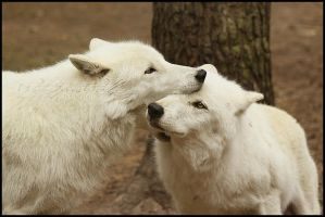 .:Nomnom your Face:. by WhiteSpiritWolf
