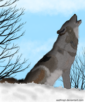 Wolf on snow by AsdfirePL