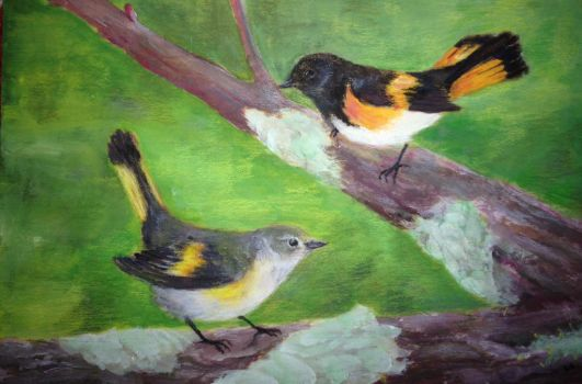 American Redstart by dancingfoxbird