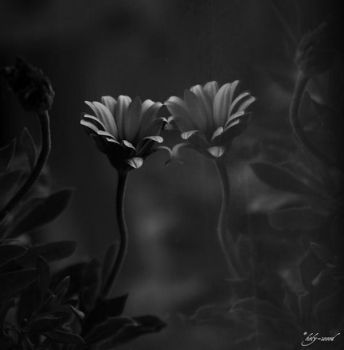 long lost (bw) by holy-wood