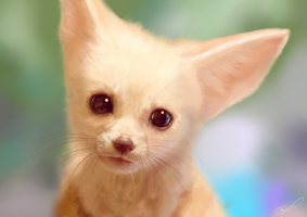 Fennec digital painting by Martith