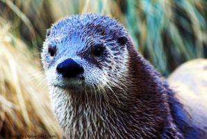 You otter know better by Riphath