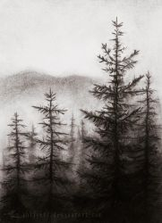 Coniferous by Shirvell