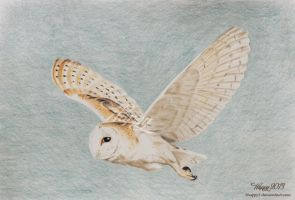 Barn Owl Flying by blue5dragons