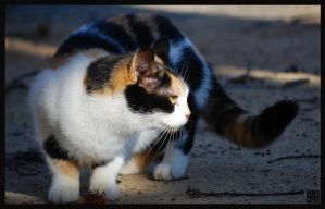 Calico Baby by MauserGirl