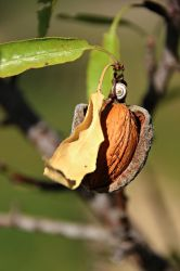 Almond ready to eat by Gerfer