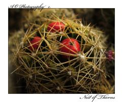 Nest of Thorns by AO-Photography