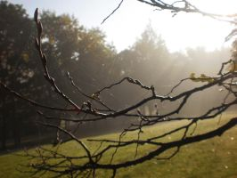 Autumn Morning by tinuvielluthien