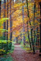 Autumn Forest by Quit007