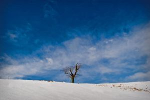 Snowy Tree by NeroTheViper