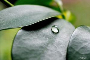The essential of life by Spid4