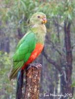 Wet King Parrot by BreeSpawn