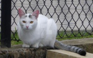 White Cat 4 by Tenel