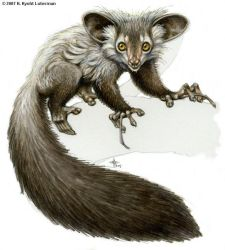 Aye-aye in markers by kyoht