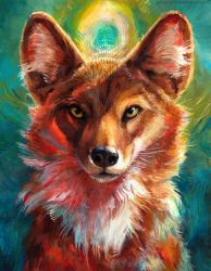 Dhole by kenket