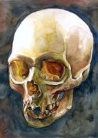 watercolour skull painting #2 by Giulianobuffi
