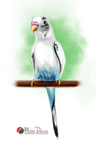 Parakeet Budgerigar by Milee-Design